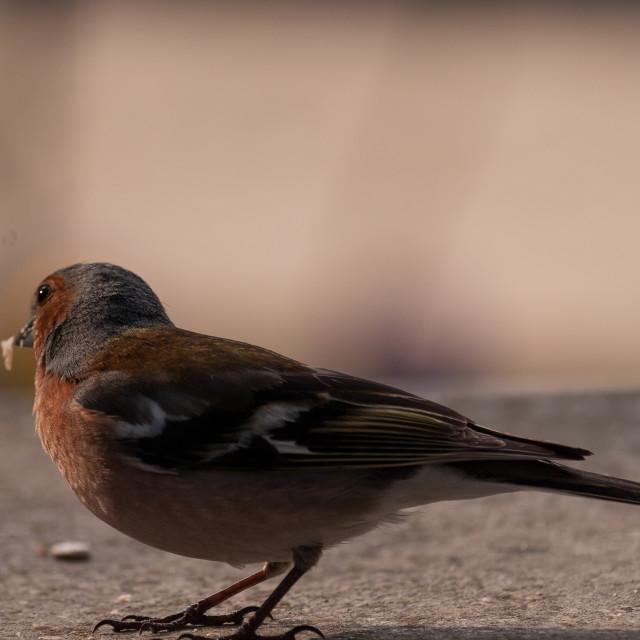 """Monastary Bird"" stock image"