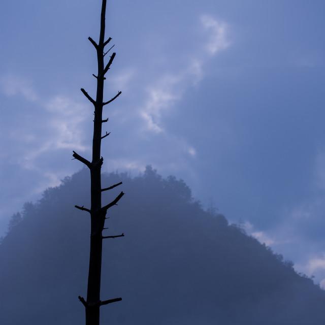 """Backlight tree"" stock image"