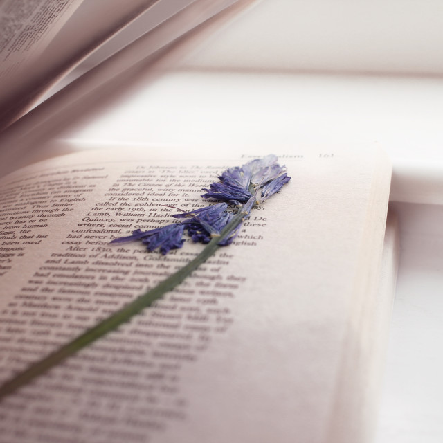 """Blue flower in a book"" stock image"