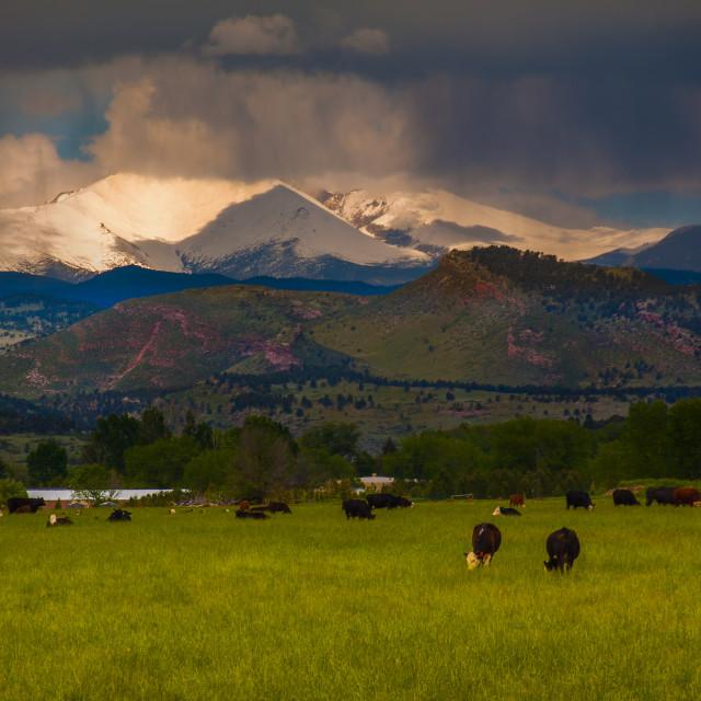 """Farm Land Colorado"" stock image"