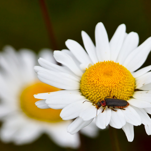"""""""So much pollen"""" stock image"""