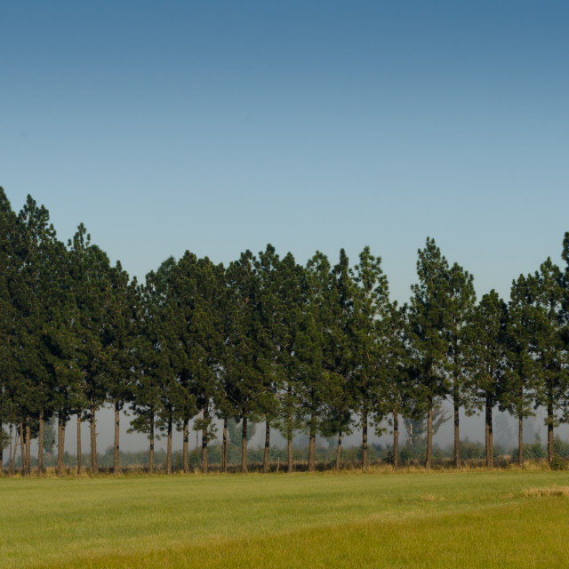 """Trees in a Row"" stock image"
