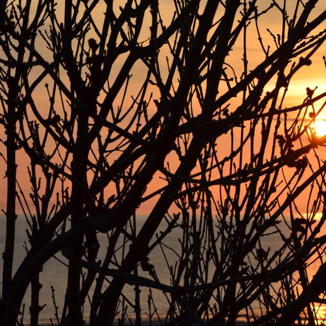 """""""Tangled sunrise"""" stock image"""