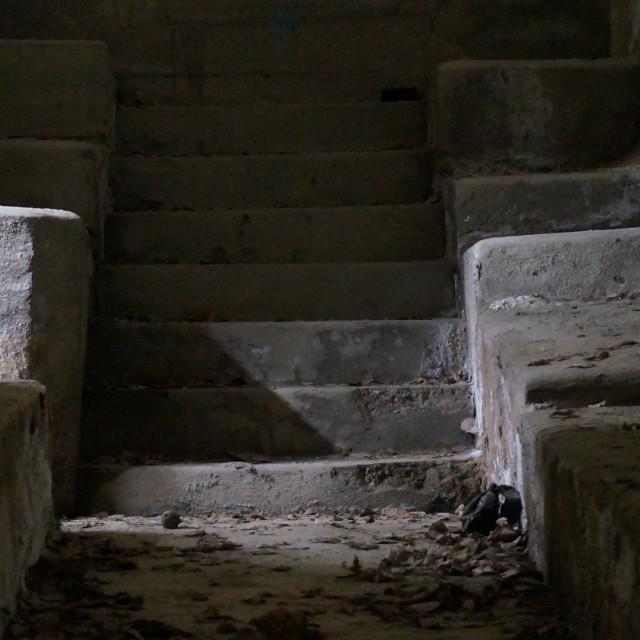 """""""Stair inside military bunker"""" stock image"""