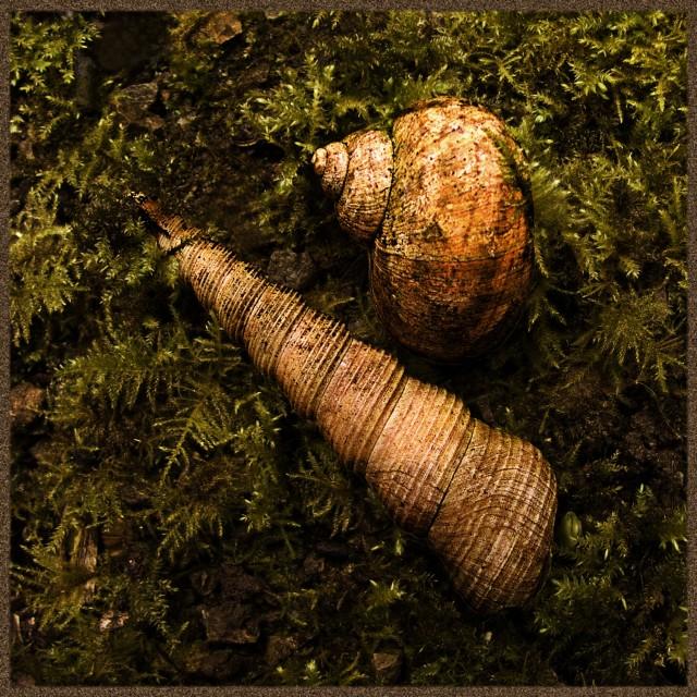 """Sea Shells on Moss"" stock image"