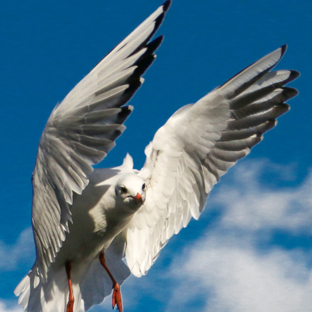 """Hungry gull"" stock image"