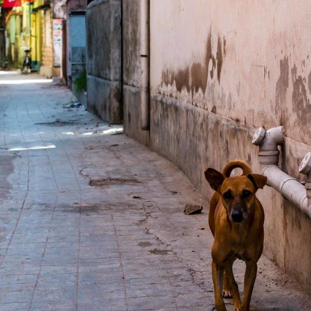 """""""Street dog"""" stock image"""