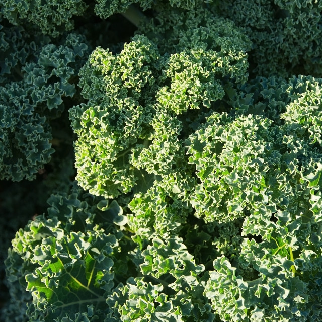"""Green kale background"" stock image"