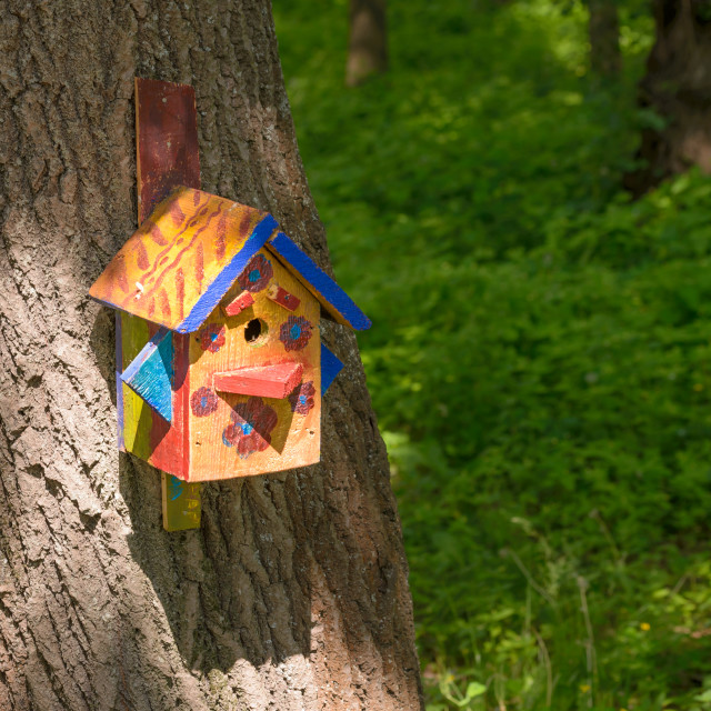 """""""Bird Shelter in the Wood"""" stock image"""