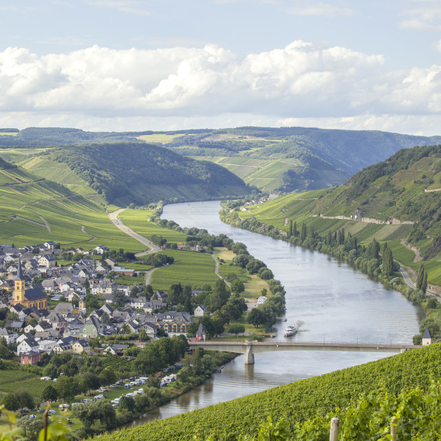 """""""River Mosel and vineyards"""" stock image"""
