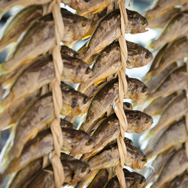 """Strings of fish drying at Kwang Jang Market, Seoul, South Korea"" stock image"
