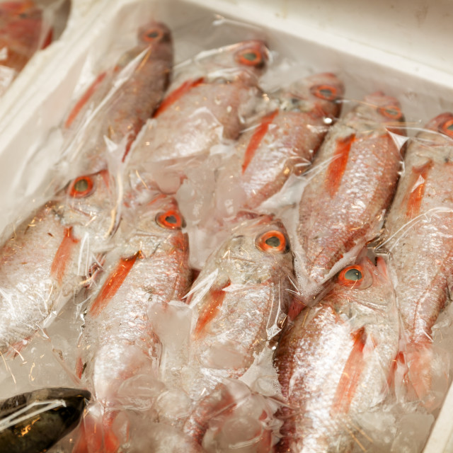 """Fresh fish on ice at Kwang Jang Market, Seoul, South Korea"" stock image"