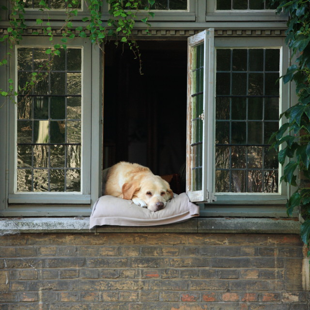 """Sleeping dog in window"" stock image"