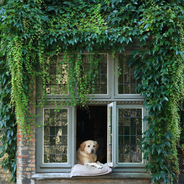 """Dog in window"" stock image"