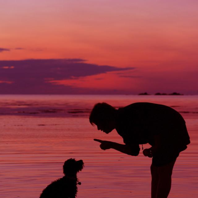 """Puppy Training"" stock image"