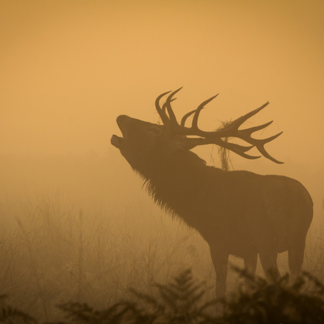"""Bellow in the mist"" stock image"