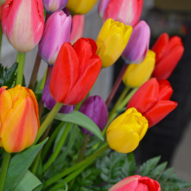 """Colorful spring tulip arrangement"" stock image"