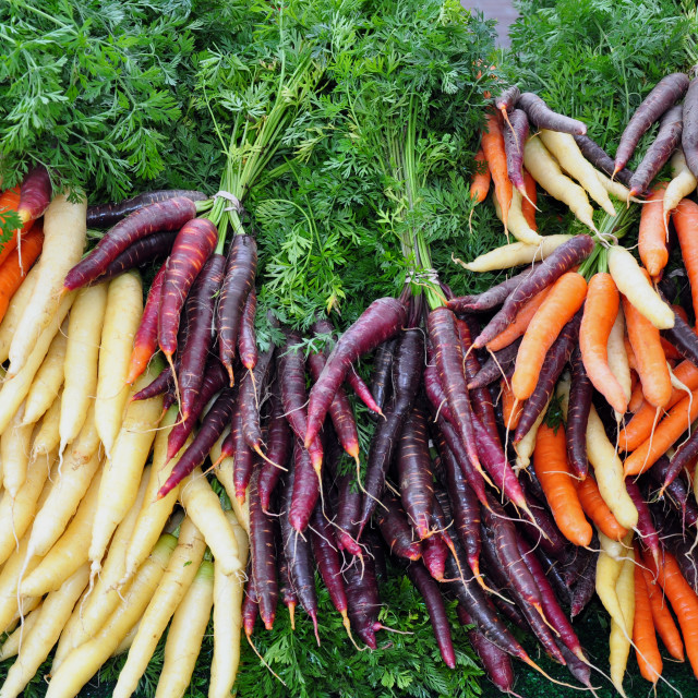 """Colorful winter carrots"" stock image"