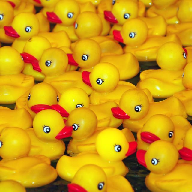 """Yellow rubber duckies"" stock image"