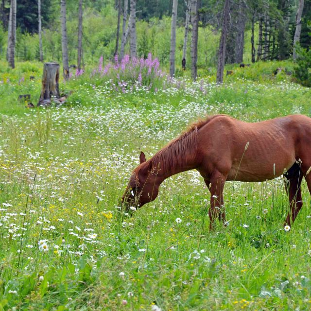 """""""Old brown horse"""" stock image"""