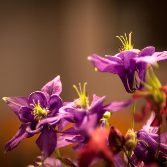 """Red-purple flower bouquet"" stock image"