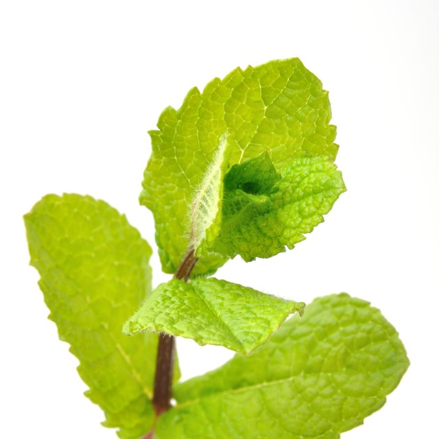 """Mint leaves"" stock image"