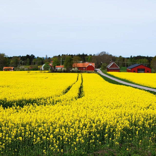 """Village with red barns at spring"" stock image"