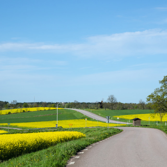 """""""Landscape in green and yellow"""" stock image"""