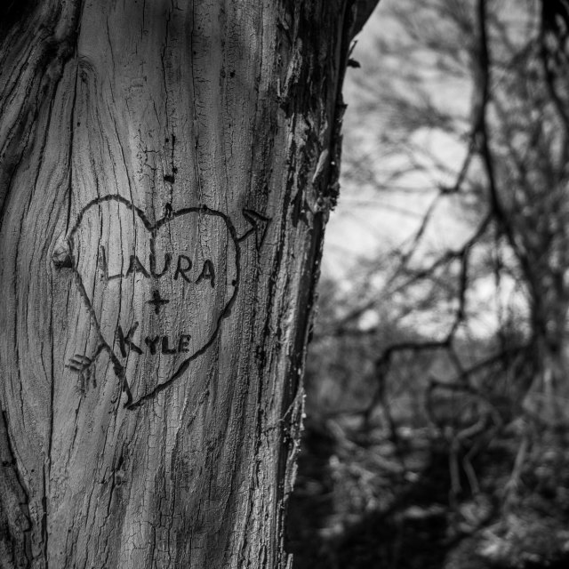 """Heart Carved into Tree"" stock image"