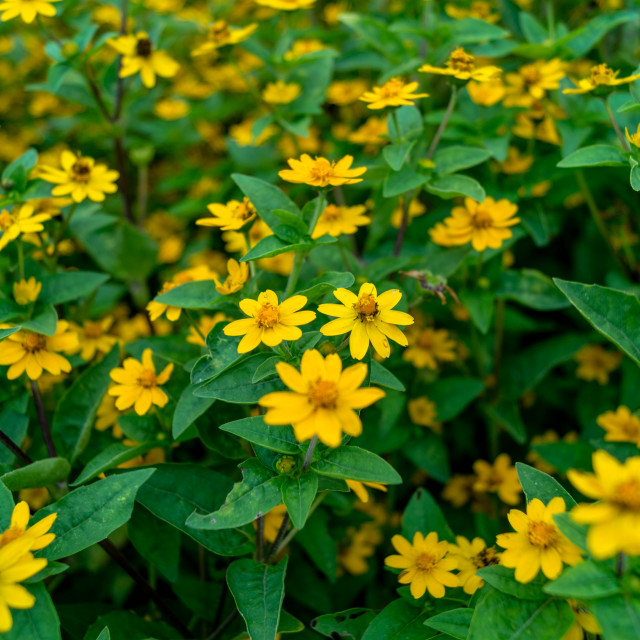 """Yellow Flowers"" stock image"