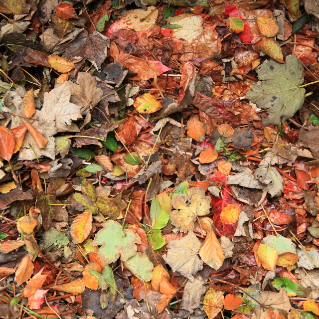 """Autumn leaves on the ground"" stock image"