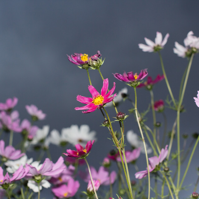 """Flowers on a stormy sky"" stock image"