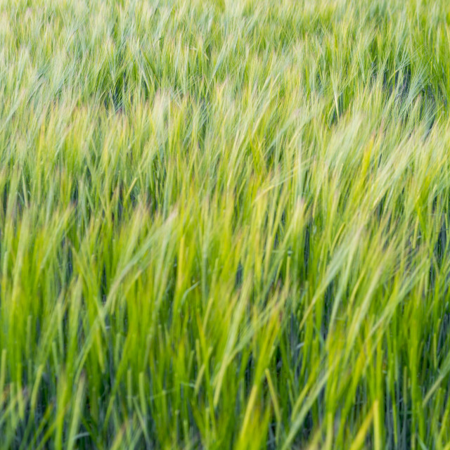 """""""Field of crops."""" stock image"""