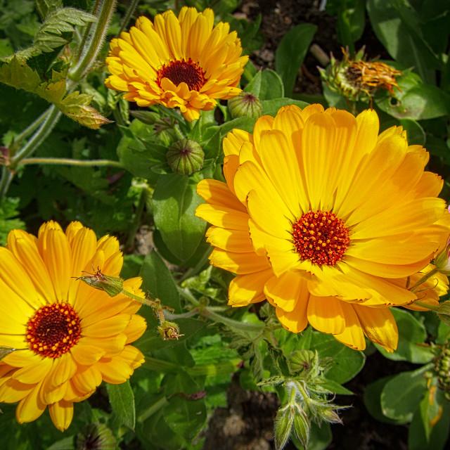 """Vibrant Flowers"" stock image"
