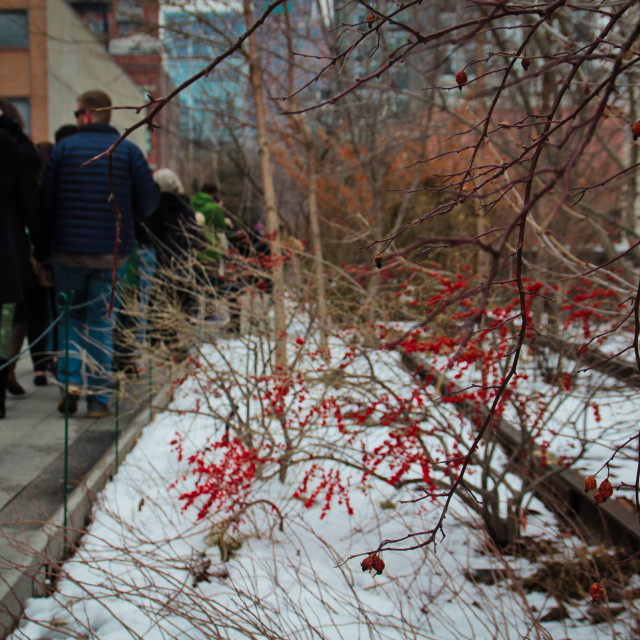 """""""The Highline, NYC"""" stock image"""