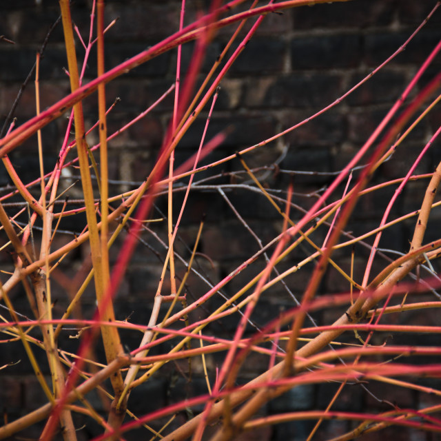 """Red plants on the Highline, NYC"" stock image"