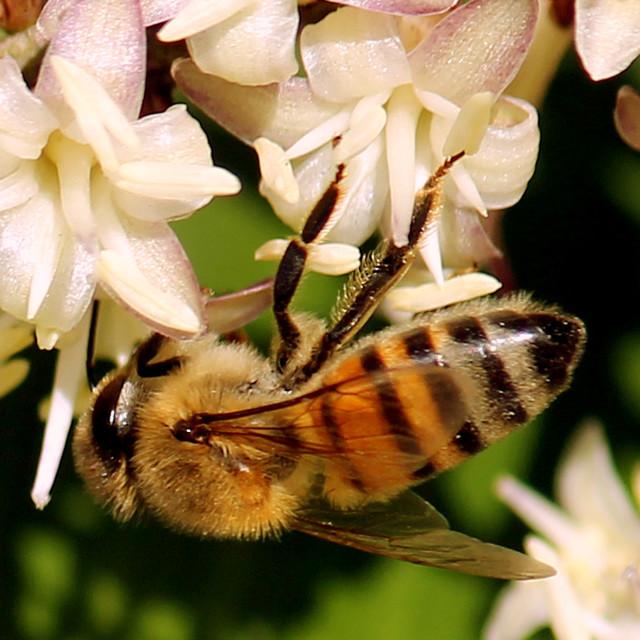 """Upside Down Bee."" stock image"
