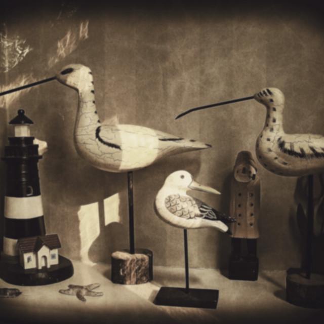 """Sea Birds etc."" stock image"