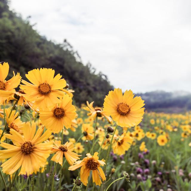 """Country Wildflowers"" stock image"