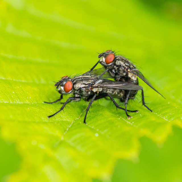 """""""Insect Lovin'"""" stock image"""