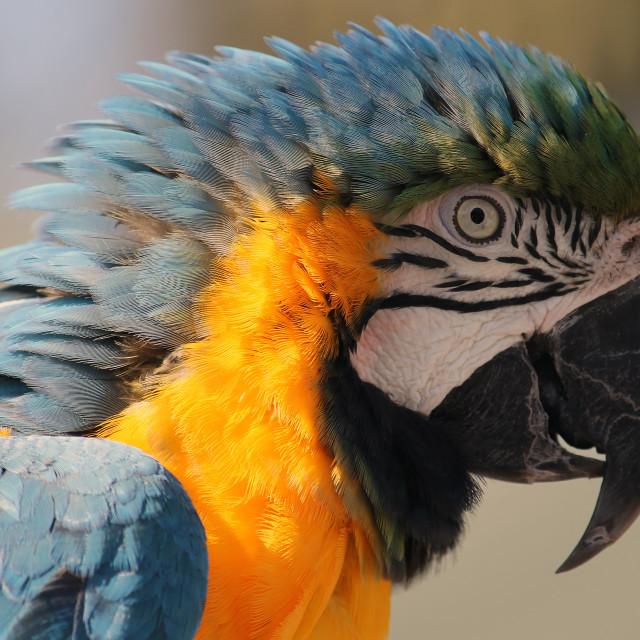 """""""Pretty Birdy"""" stock image"""