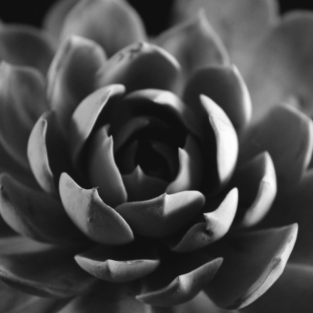 """""""A Plant In Black & White"""" stock image"""