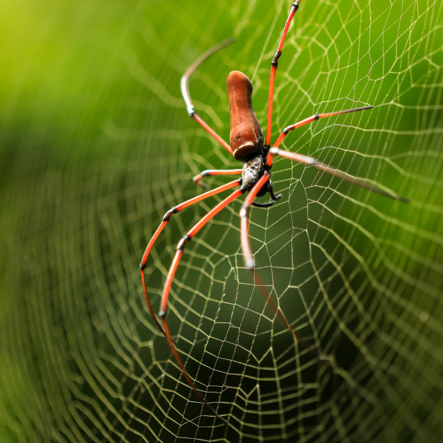"""Spider"" stock image"