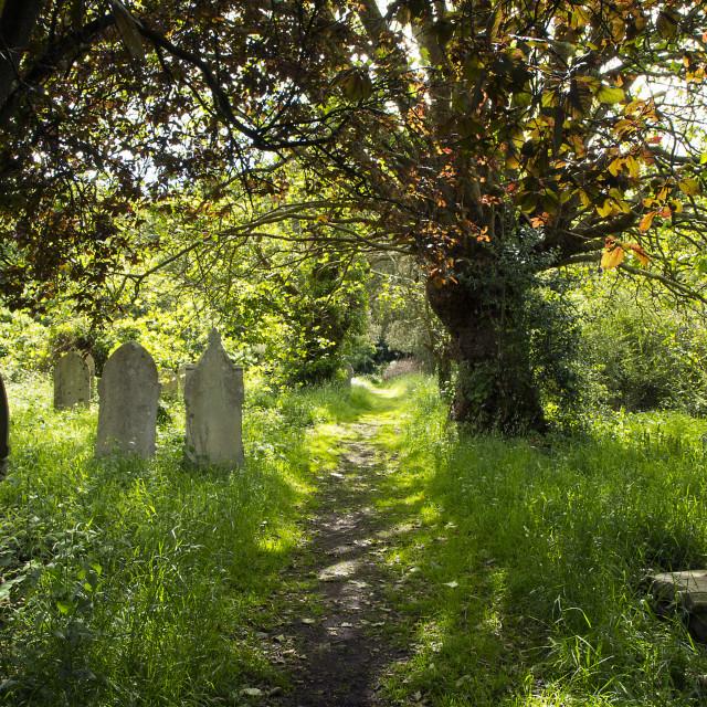 """Graveyard at Southampton Common"" stock image"