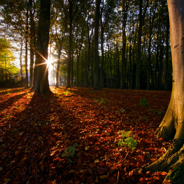 """""""Fall Forest"""" stock image"""