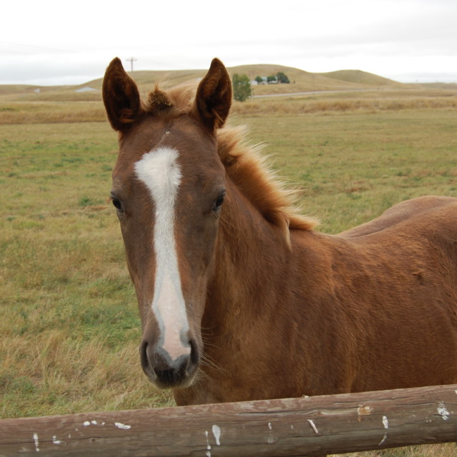 """""""Brown Horse"""" stock image"""