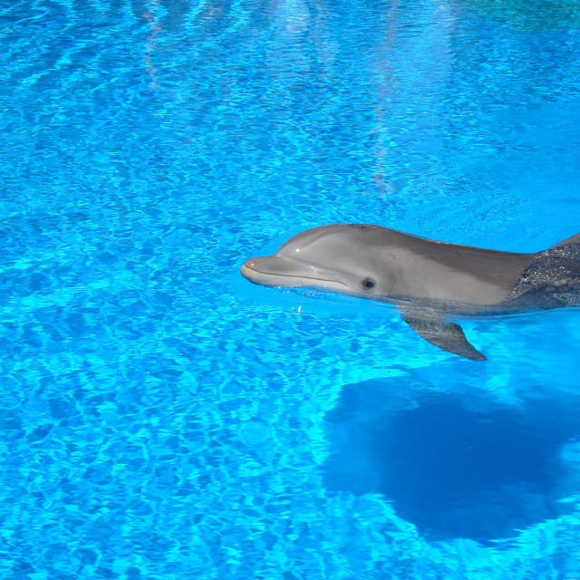 """Dolphin"" stock image"