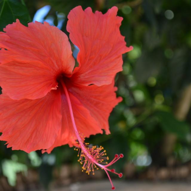 """Flora Brazilia"" stock image"