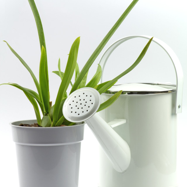 """Watering can and plant"" stock image"
