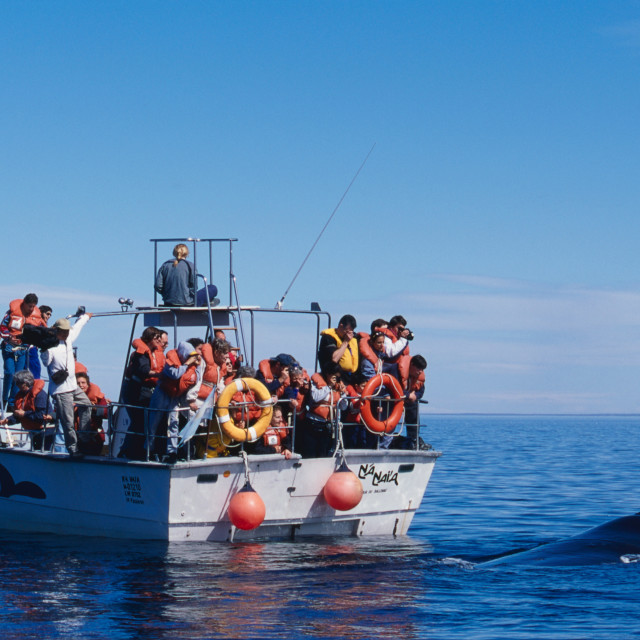 """""""Whale watching"""" stock image"""